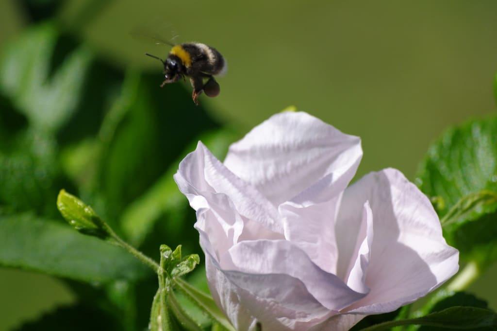 Böse Bauern – gute Gartenbesitzer? Warum das Insektensterben uns alle angeht.