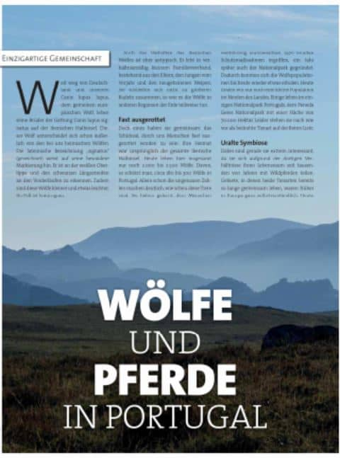 """Wölfe und Pferde in Portugal-Artikel von Sabine Bengtsson im Magazin """"Der Hund"""""""
