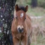 Lobito – das Wildpferdefohlen. Eine wahre Geschichte von Sabine Bengtsson