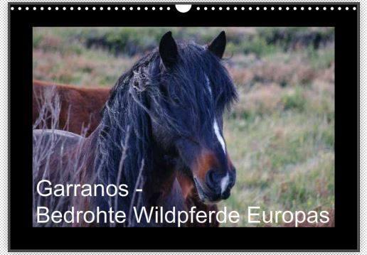 Kalender Garranos 2015 Vorschau www.perlenfaenger.com