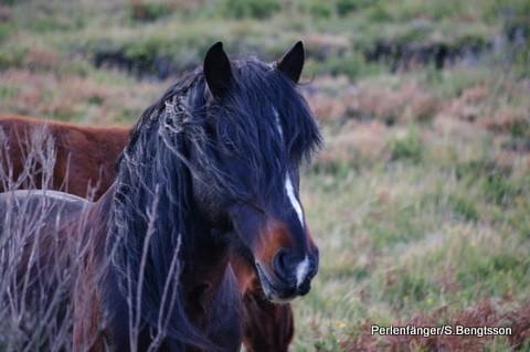 Garrano Wildpferde Projekt – Portugal
