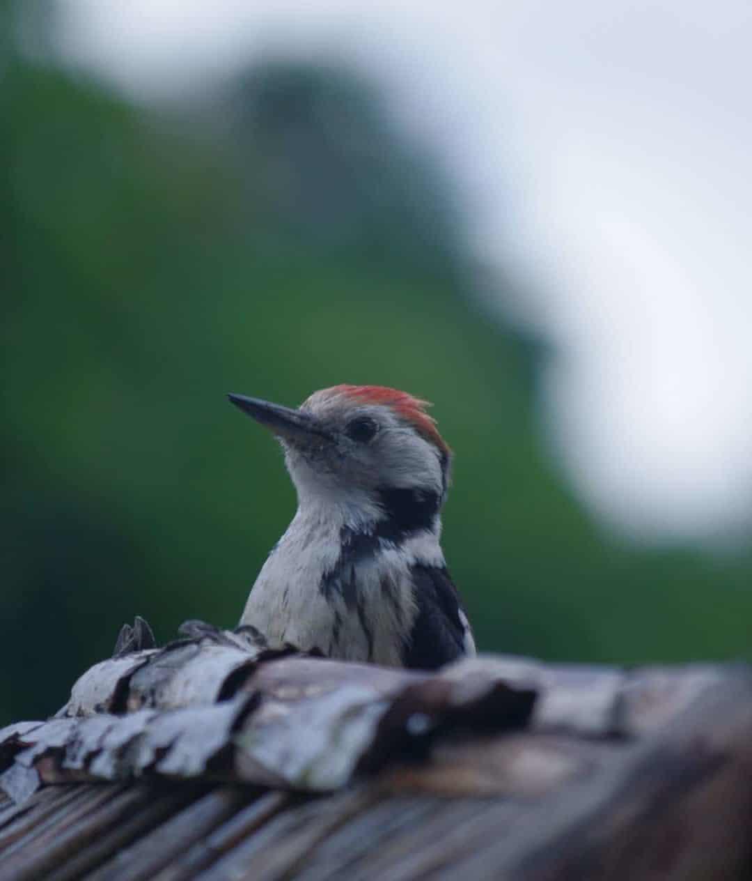 Vogelfütterung ist gerade im Sommer so wichtig!