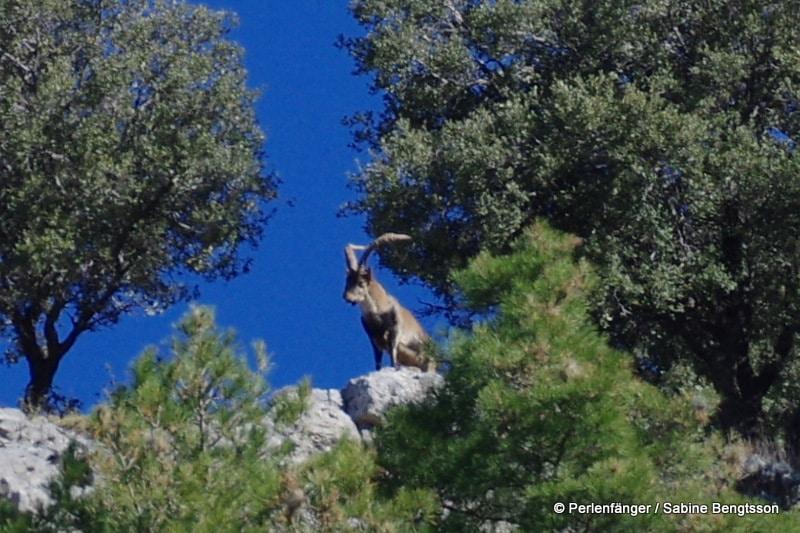 Sierra Nevada in Andalusien – eine Welt aus Schnee, Wald und Wüste!