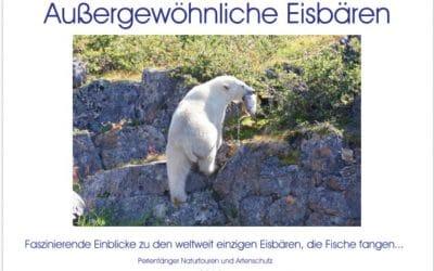 Kalender Eisbären von Sabine Bengtsson