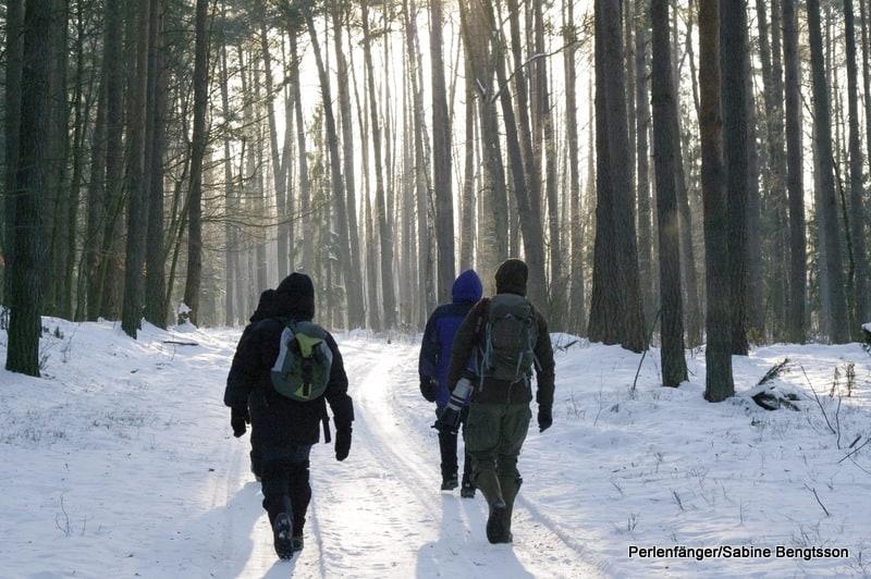 Polen im Winter, Wildtierbeobachtung von Wölfen, Elchen, Wisenten,…