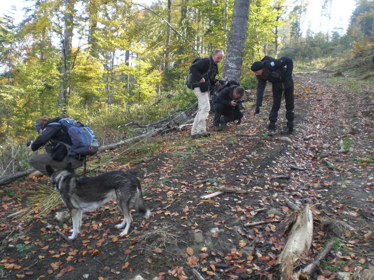 Wildes, herzliches Rumänien – über Menschen, Wölfe, Bären und Luchse…