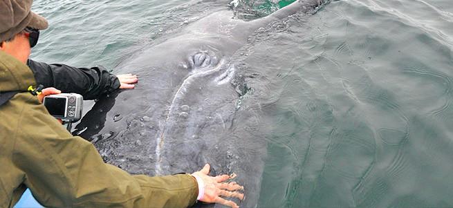 Schutz der Meeressäuger