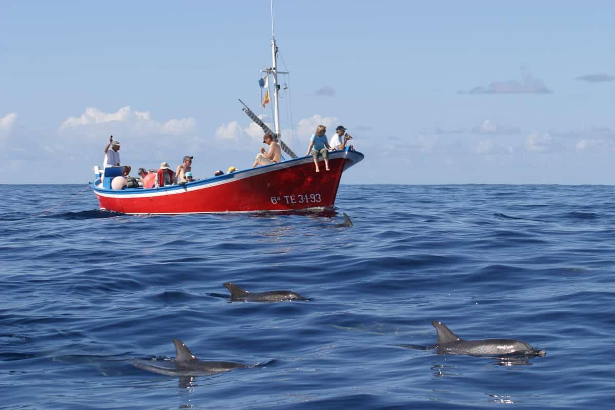 Whale Watching – eine ethische Frage?
