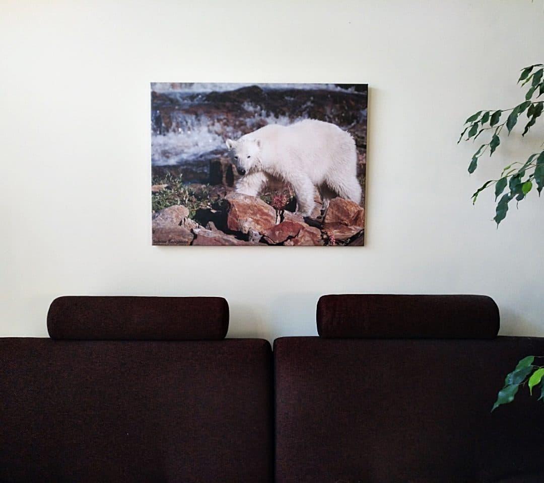 Perlenfänger Foto-Onlineshop – Best Selection