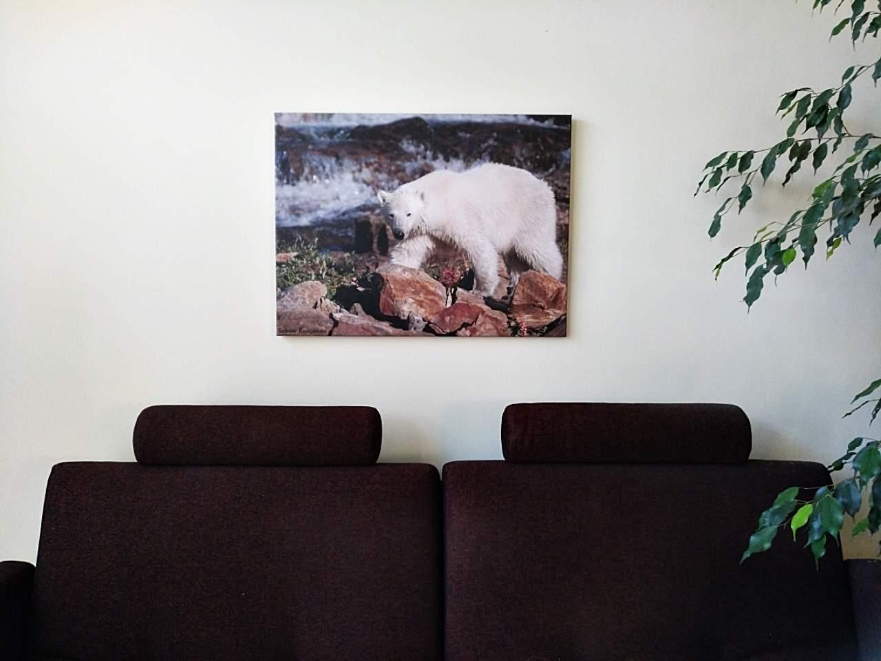 Fotoausstellung Kunst & Fell, Galerie Clic Clac Mölln