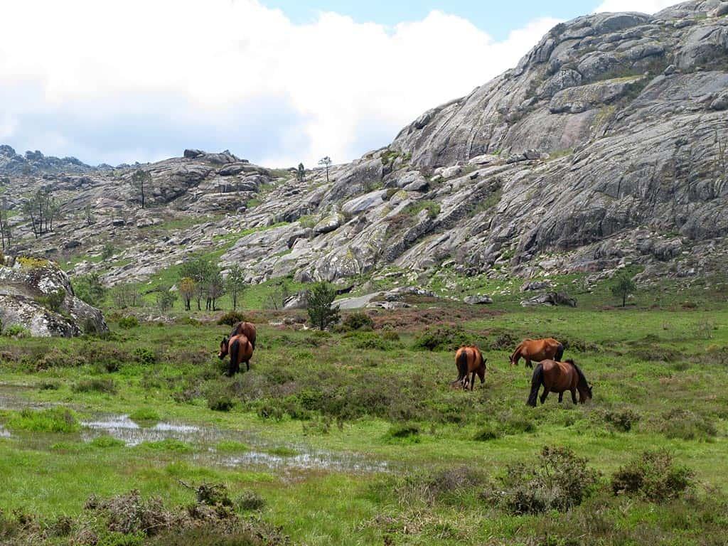 Tourvideo in die portugiesische Wildnis zu Wildpferden und Wölfen